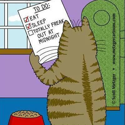 Even a cat has a To-Do List