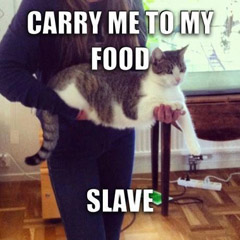 Carry me to my food... Slave